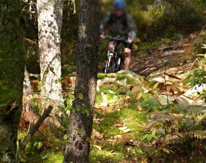 VTT dans les bois