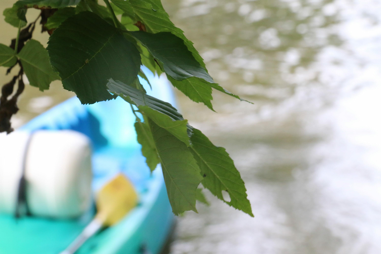 Canoe artistique